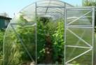 Теплица Урожай ПК 6 метров